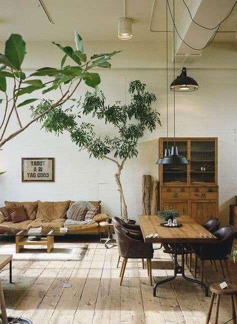 100 Лучших идей   Комнатные растения в интерьере (80 фото)